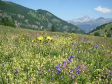 Alpine Meadow, Queryas, France