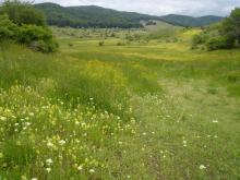 Hay meadow, Greece